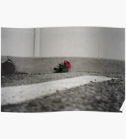 concrete flower Poster