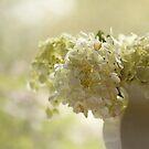 White hydrangea by SylviaCook