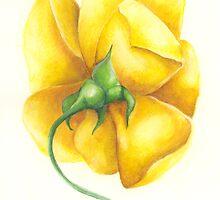 yellow rose by Belinda Lindhardt