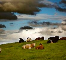 cows by garycarvill