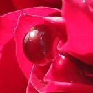 Red Splendor by Rosy Kueng