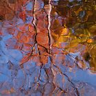 fall in the water by dc witmer