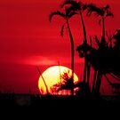 Hot Florida Sunset by NatureGreeting Cards ccwri