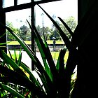 inside the glasshouse by emma-jane byles