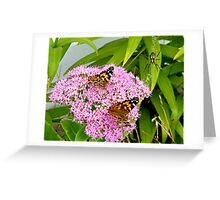 Butterfly buffet  Greeting Card