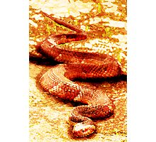 ANACONDA Photographic Print