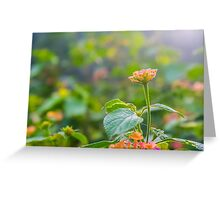 Lantana Camara Greeting Card