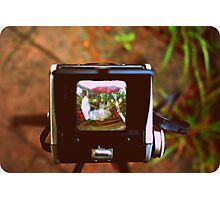 Through the Viewfinder Photographic Print