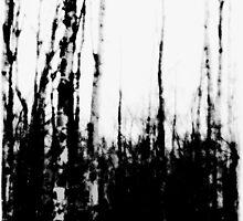 Woods by Marie Monroe