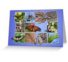 Collage of Australian Native Wildlife, Card Greeting Card