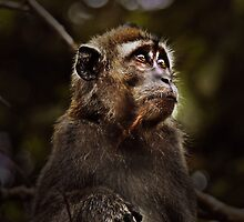 MONKEY IN LIGHT by diddle