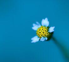 Bleu II. by Sherstin Schwartz