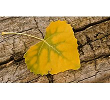 Zen Leaf Photographic Print