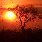 African Sunset by Marco Heising