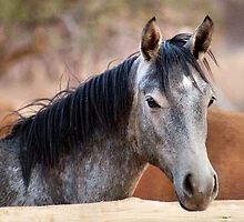 HORSE BEAUTY TWO by Magriet Meintjes