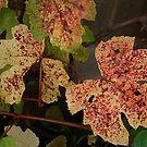 Leaves of Fall by CarolM