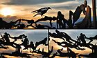 Passage /Michael Snape/, sunset &amp; magpie by andreisky