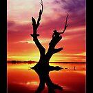 Tree Sunset by Paul Cotelli