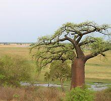 Boabab Tree by Adrianne Yzerman