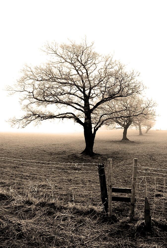Five trees by Mark E. Coward