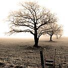 Five trees by Mark  Coward