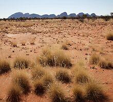 landscapes #153, desert grasses & kata tjuta by stickelsimages