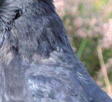 Bore Black Feathers Sticker