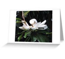 Pure Magnolia  Greeting Card
