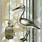 Bird Cage by David Mueller