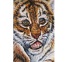 Tiger Laugh Photographic Print