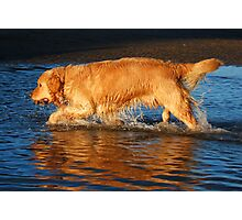 Fetch - Got it! Photographic Print