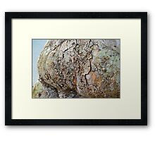 Nature's abstracts Framed Print