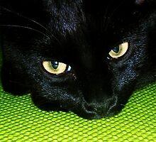 Green Eyed Goblin by Danielle Morin
