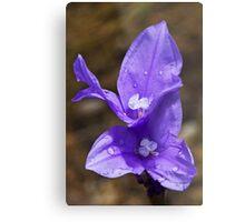 Purple Flag Metal Print