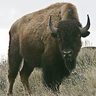 The Lone Bull by Ken McElroy