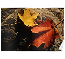 Maple Leaf Pair on Shadowy Rock Poster