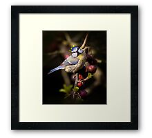 Feathered Jewel Framed Print