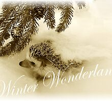 Daisy Mae's Winter Wonderland by BlackSwan