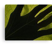 Hand Shadow on Back-lit Catalpa Leaf Canvas Print