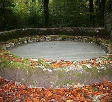 Autumn in Coole Park by John Quinn