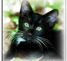 Whiskers by Julie's Camera Creations <><