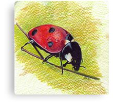 Ladybug - Realistic Art Drawing Canvas Print