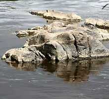Hippo and Crocodile Rocks by Pamela Jayne Smith