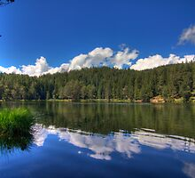 At the Lake by Stefan Trenker