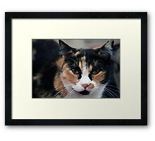 Sleepy eyes Framed Print