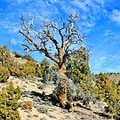 One Tree by marilyn diaz