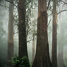 Old Growth Mountain Ash. by Ern Mainka