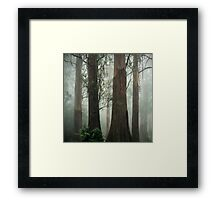 Old Growth Mountain Ash. Framed Print