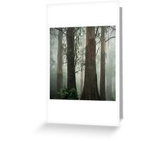 Old Growth Mountain Ash. Greeting Card