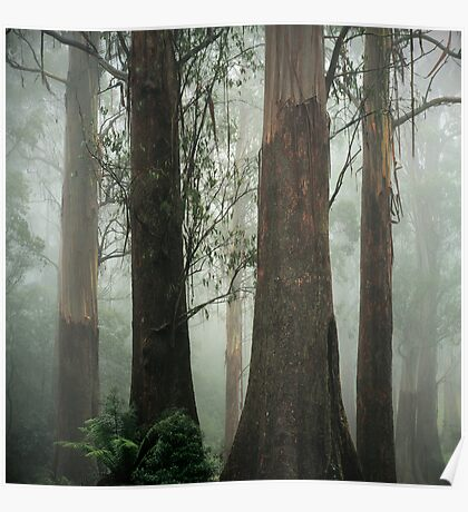 Old Growth Mountain Ash. Poster
